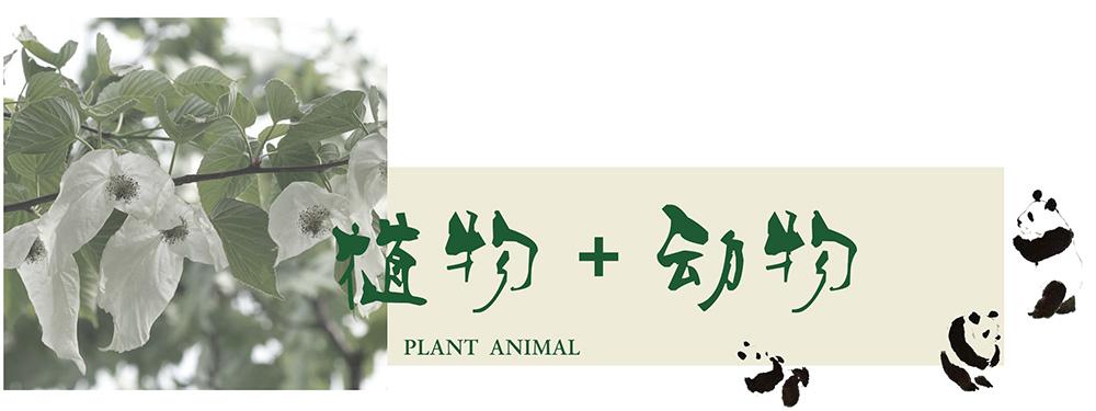 唐家河动物.jpg